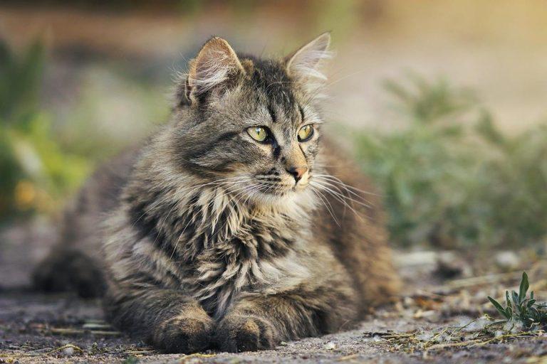 Najlepsze porady dla kotów w sieci
